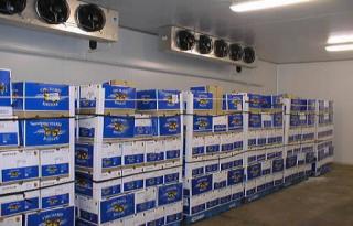综合性物流冷库安装-低温库、速冻库、恒温库工程案例