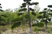 富森生态园