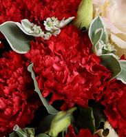 妈妈的爱----红色康乃馨16枝,香槟色