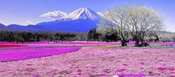 美景在日本1.png