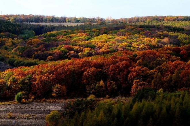 生态防护林
