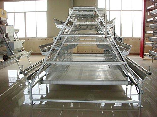 阶梯传送带式清粪自动化养鸡设备.jpg